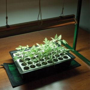 Growing clones on a heat mat