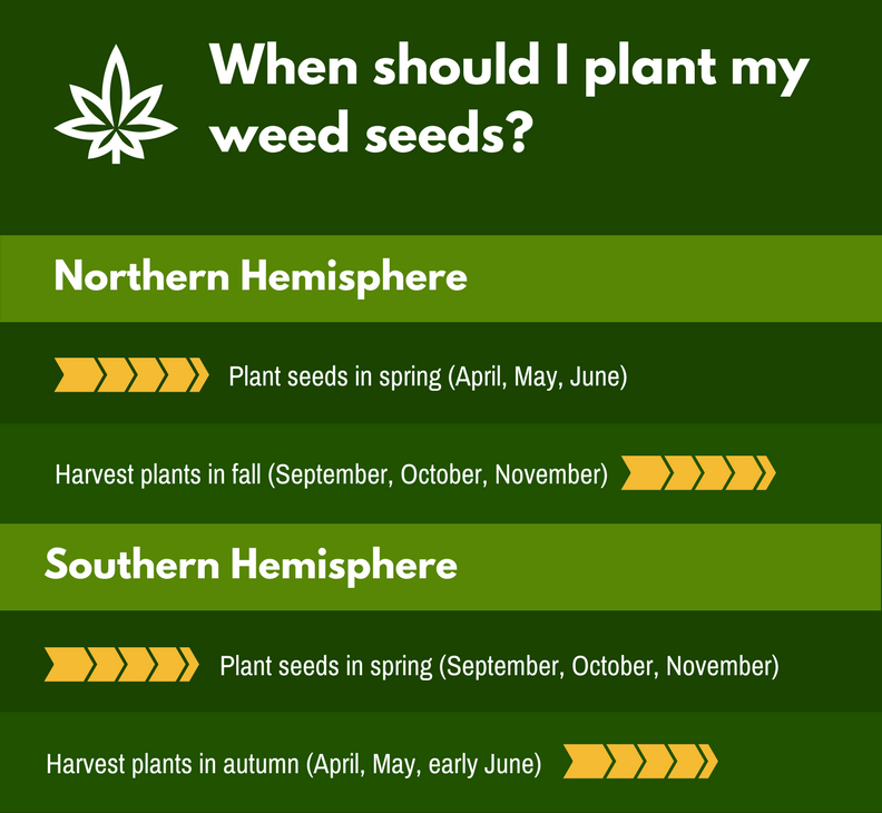 When to plant weed seeds