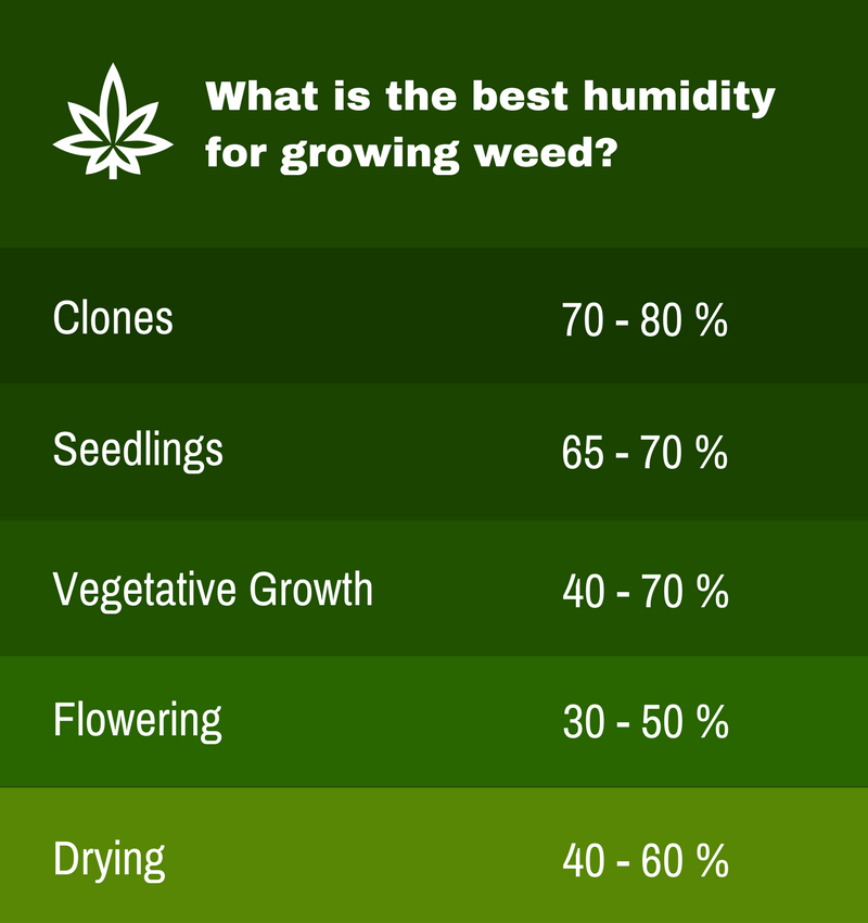 Infographic - what is the best humidity for growing weed