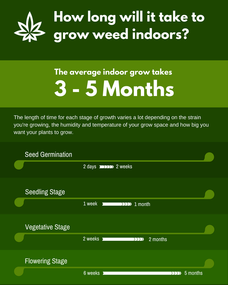 How long does it take to grow weed indoors?