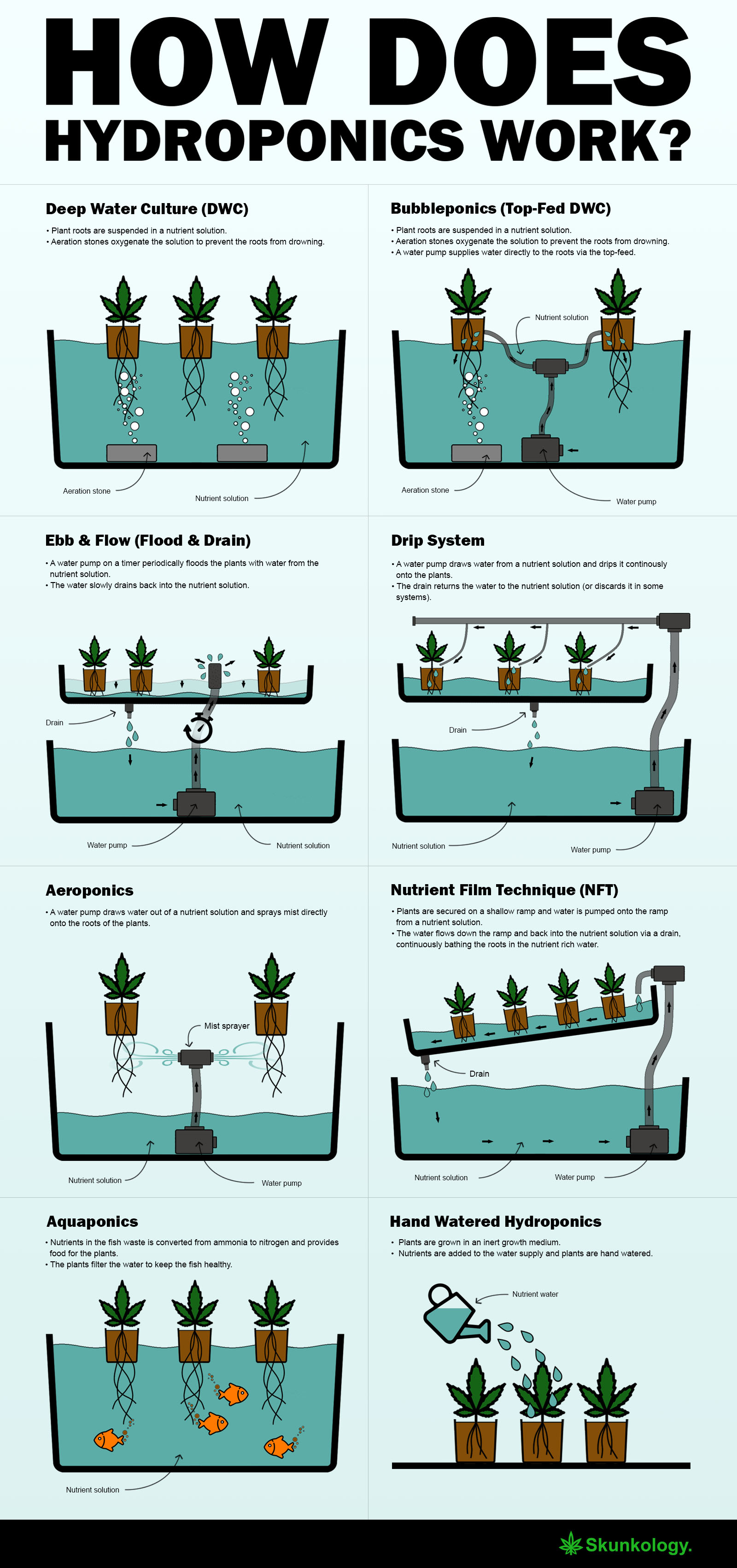 How Does Hydroponics Work  - Infographics