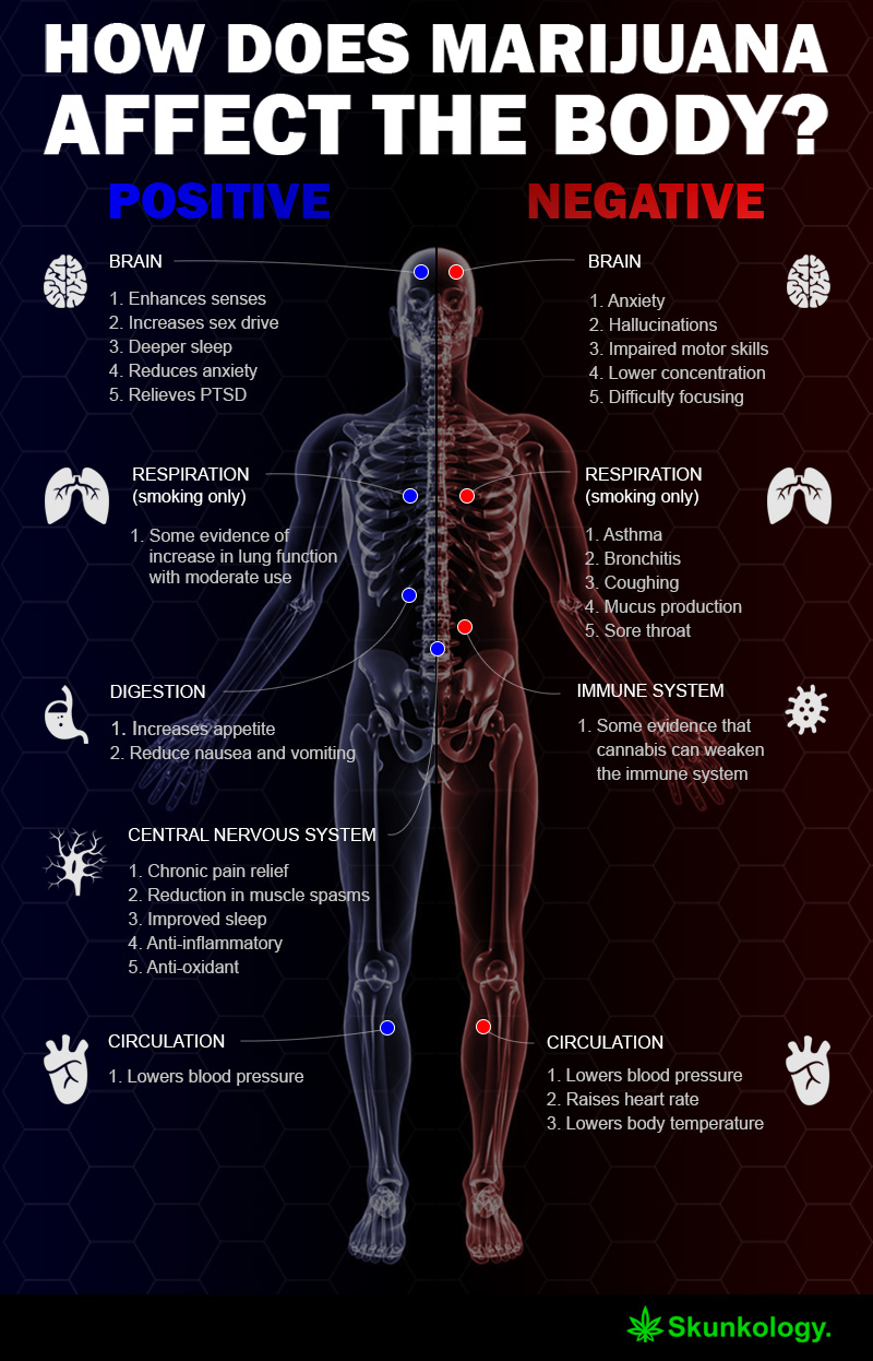 how does marijuana affect the body? - infographic - skunkology