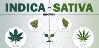 indica vs sativa - whats the difference