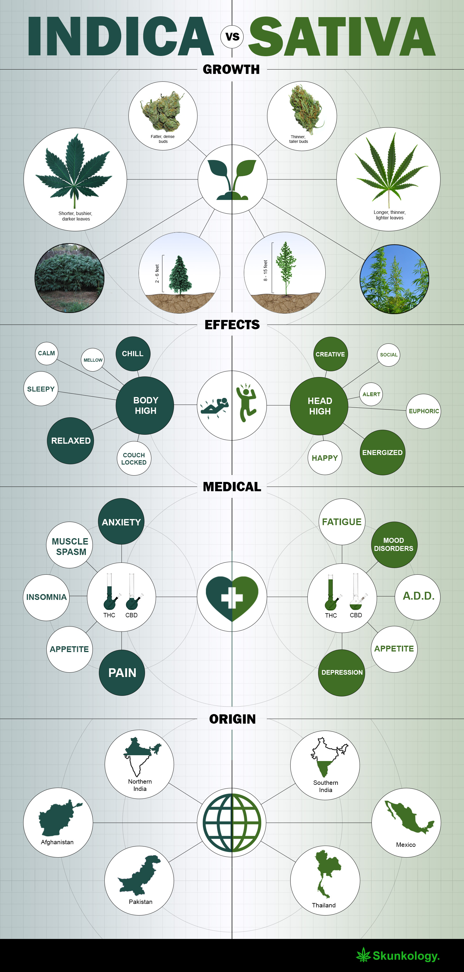 indica vs sativa - whats the difference [infographic2]
