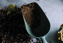 the best soil for growing weed